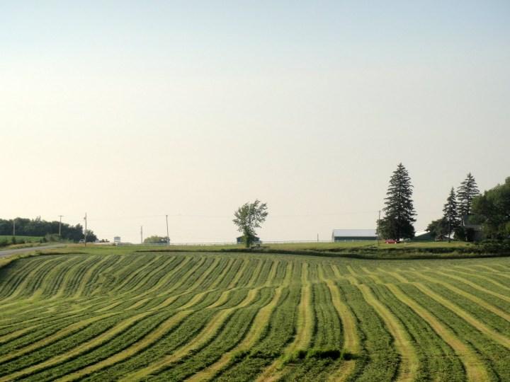 cut hay