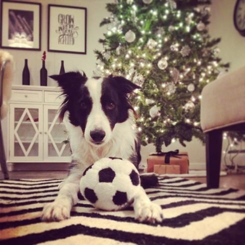 Jersey soccer ball