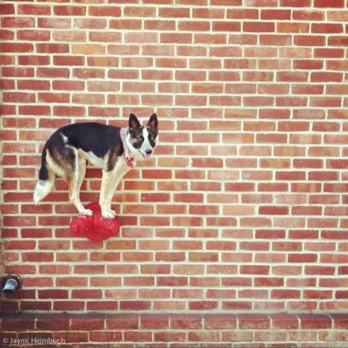 balancing_dog
